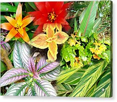 Collage Of Tropical Colors Acrylic Print by Van Ness