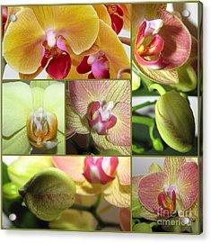 Collage Orchids 01yellow Green - Elena Yakubovich Acrylic Print by Elena Yakubovich