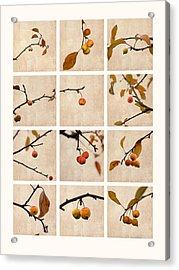 Collage Paradise Apple Acrylic Print by Alexander Senin