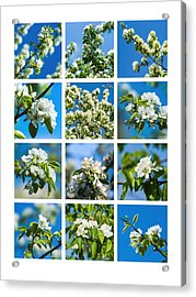 Collage Spring Blossoms 1 Acrylic Print by Alexander Senin