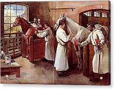 Collecting Horse Blood Acrylic Print by National Library Of Medicine