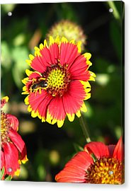 Collecting Acrylic Print by Peggy Burley