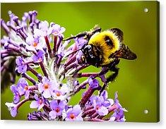 Collecting Pollen Acrylic Print
