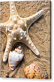 Collecting Shells Acrylic Print by Colleen Kammerer