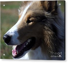 Collie At The Ashokan Acrylic Print