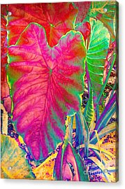 Colocasia Acrylic Print by Denise Tomasura