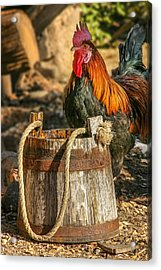 Coloful Rooster 2 Acrylic Print