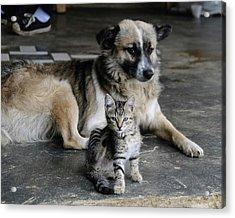 Colombia, Minca Kitten And Dog Acrylic Print by Matt Freedman
