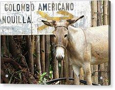 Colombia, Minca Mule And Sign Acrylic Print by Matt Freedman