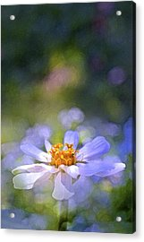 Color 121 Acrylic Print by Pamela Cooper