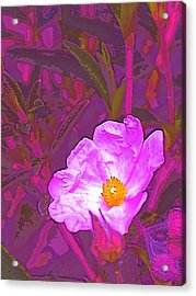 Acrylic Print featuring the photograph Color 2 by Pamela Cooper