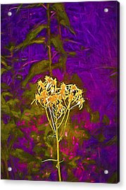 Acrylic Print featuring the photograph Color 5 by Pamela Cooper