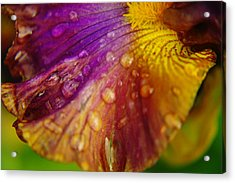 Color And Droplets Acrylic Print by Jeff Swan