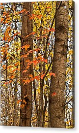Color And Trees Lan 225 Acrylic Print