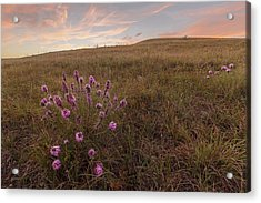 Acrylic Print featuring the photograph Color At Sunset by Scott Bean