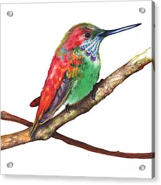 Acrylic Print featuring the drawing Color Bird 9 by Anthony Burks Sr