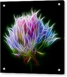Color Burst Acrylic Print by Adam Romanowicz