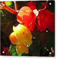 Color Burst Acrylic Print by Gracia  Molloy