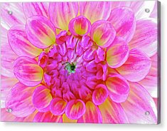 Color Burst Acrylic Print by Michael Hubley