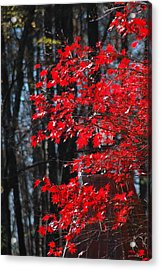 Color Filled Acrylic Print by Les Scarborough