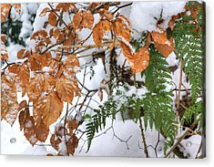 Color In The Snow Acrylic Print by David Birchall