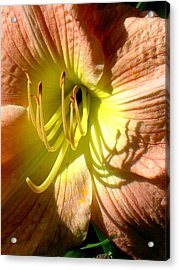 Color Me Just Peachy Acrylic Print