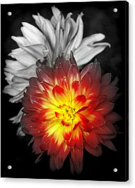 Color Of Life Acrylic Print by Karen Wiles
