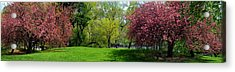 Acrylic Print featuring the photograph Color Of Spring by Yue Wang
