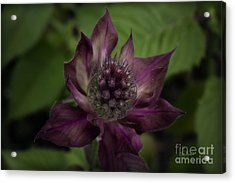 Color Purple Acrylic Print by Cris Hayes