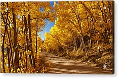 Colorado Aspen Tunnel  Acrylic Print