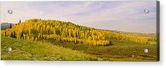 Colorado Aspens Acrylic Print by Brian Harig