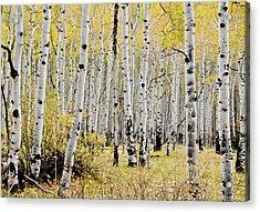 Acrylic Print featuring the photograph Colorado Aspens by Geraldine Alexander