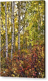 Acrylic Print featuring the photograph Colorado Changing Eight    by Eric Rundle
