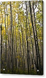 Acrylic Print featuring the photograph Colorado Changing Fifteen  by Eric Rundle