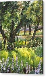 Colorado Evening Shadows Acrylic Print by Anne Gifford