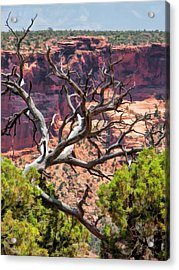 Colorado National Monument Dead Branches Acrylic Print by Christopher Arndt