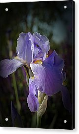Acrylic Print featuring the photograph Colorado Purple Iris by Susan D Moody