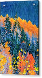 Colorado Trees At Fall Acrylic Print
