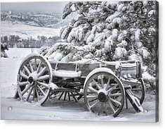 Colorado Wagon Acrylic Print by Darren  White
