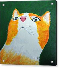 Colorcat 8 Acrylic Print