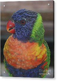 Colored Feathers Acrylic Print