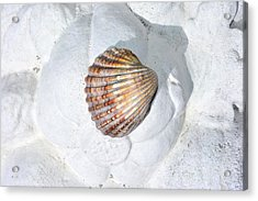 Colored Seashell  Acrylic Print