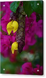 Colorful Abundance Acrylic Print