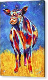 Colorful Angus Cow Acrylic Print by Michelle Wrighton