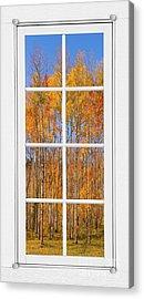 Colorful Aspen Tree View White Window Acrylic Print