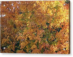 Colorful Autumn Acrylic Print by Laura Watts