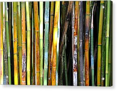 Acrylic Print featuring the photograph Colorful Bamboo by Jodi Terracina