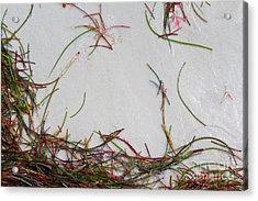 Colorful Beach Grass Acrylic Print