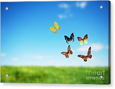Colorful Buttefly Spring Field Acrylic Print by Michal Bednarek