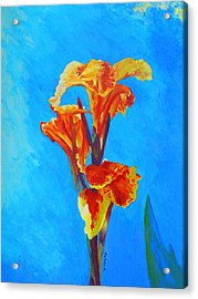 Acrylic Print featuring the painting Colorful Canna by Margaret Saheed